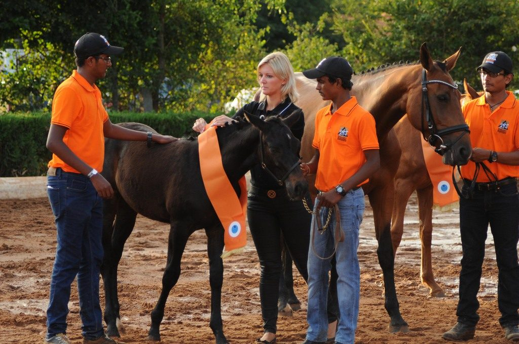horse breeding in india